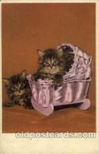 cat001413 - Cat Cats, Post Card, Post Card