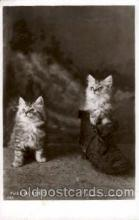 cat001424 - Cat Cats, Post Card, Post Card