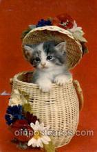 cat001443 - Cat Cats, Post Card, Post Card