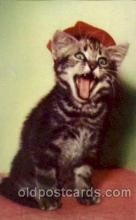 cat001467 - Cat Cats, Post Card, Post Card