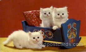 cat001510 - Cat Cats, Post Card, Post Card