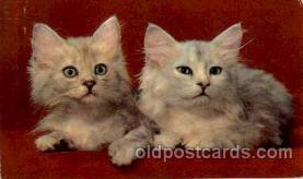 cat001529 - Cat Cats, Post Card, Post Card