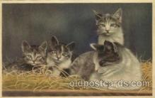 cat001541 - Cat Cats, Post Card, Post Card