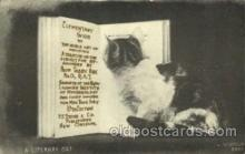 cat001563 - Cat Cats, Post Card, Post Card