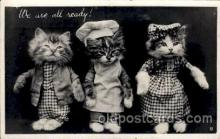 cat001577 - Cat Cats, Post Card, Post Card