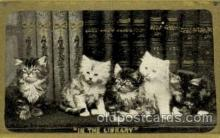 cat001588 - Cat Cats, Post Card, Post Card