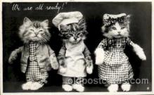 cat001589 - Cat Cats, Post Card, Post Card