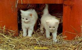 cat001594 - Cat Cats, Post Card, Post Card