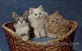 cat001595 - Cat Cats, Post Card, Post Card