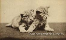 cat001603 - Cat Cats, Post Card, Post Card