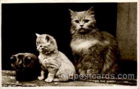 cat001606 - Cat Cats, Post Card, Post Card