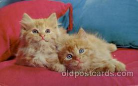 cat001609 - Cat Cats, Post Card, Post Card