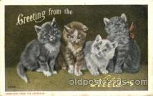 cat001619 - Cat Cats, Post Card, Post Card