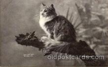 cat001622 - Cat Cats, Post Card, Post Card
