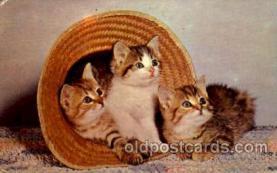 cat001627 - Cat Cats, Post Card, Post Card