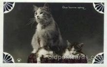 cat001630 - Cat Cats, Post Card, Post Card