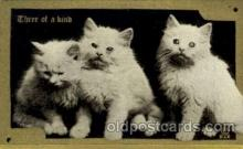 cat001632 - Cat Cats, Post Card, Post Card