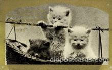 cat001636 - Cat Cats, Post Card, Post Card