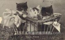cat001647 - Cat Cats, Old Vintage Antique Postcard Post Card