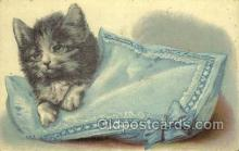 cat001654 - Cat Cats, Old Vintage Antique Postcard Post Card