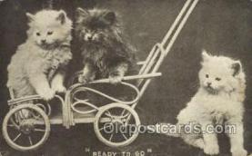 cat001657 - Cat Cats, Old Vintage Antique Postcard Post Card