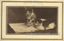 cat001667 - Cat Cats, Old Vintage Antique Postcard Post Card