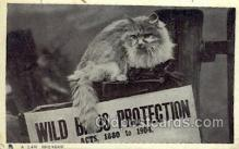 cat001668 - Cat Cats, Old Vintage Antique Postcard Post Card