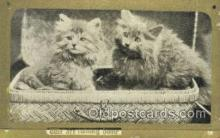 cat001669 - Cat Cats, Old Vintage Antique Postcard Post Card
