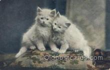 cat001704 - Cat Cats, Old Vintage Antique Postcard Post Card