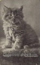 cat001750 - Cat Cats, Old Vintage Antique Postcard Post Card