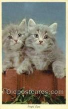 cat001754 - Cat Cats, Old Vintage Antique Postcard Post Card