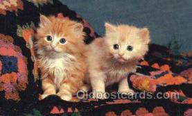 cat001756 - Cat Cats, Old Vintage Antique Postcard Post Card