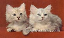 cat001757 - Cat Cats, Old Vintage Antique Postcard Post Card