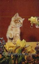 cat001761 - Cat Cats, Old Vintage Antique Postcard Post Card