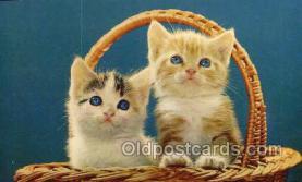 cat001762 - Cat Cats, Old Vintage Antique Postcard Post Card