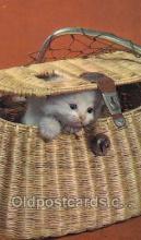 cat001763 - Cat Cats, Old Vintage Antique Postcard Post Card