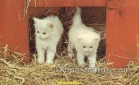 cat001764 - Cat Cats, Old Vintage Antique Postcard Post Card