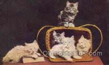 cat001770 - Cat Cats, Old Vintage Antique Postcard Post Card