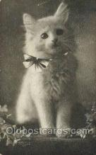cat001800 - Cat Cats, Old Vintage Antique Postcard Post Card