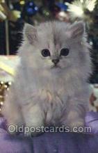 cat001817 - Cat Cats, Old Vintage Antique Postcard Post Card