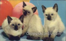 cat001857