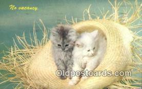 cat001863
