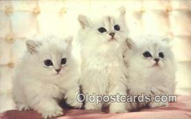 cat001870