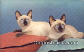 cat001871