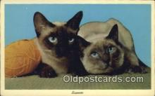 cat001887 - Chrome Cat Postcard, Post Card, Postales, Postkaarten, Kartpostal, Cartes, Postale, Postkarte, Ansichtskarte