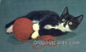 cat001920 - Chrome Cat Postcard, Post Card, Postales, Postkaarten, Kartpostal, Cartes, Postale, Postkarte, Ansichtskarte