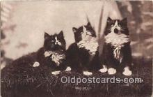 cat002050 - Looking for Mars CE Bullard Postcard Post Card