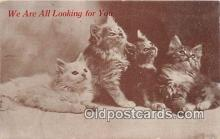 cat002052 - Postcard Post Card