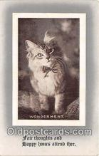 cat002076 - Wonderment  Postcard Post Card