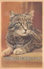 cat002084 - Postcard Post Card